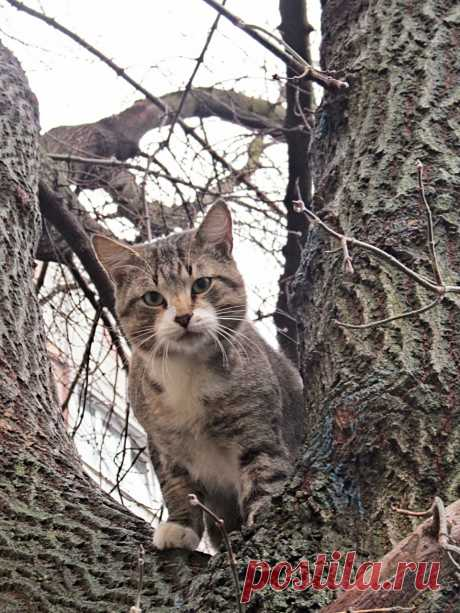 #на_дереве   #кошки