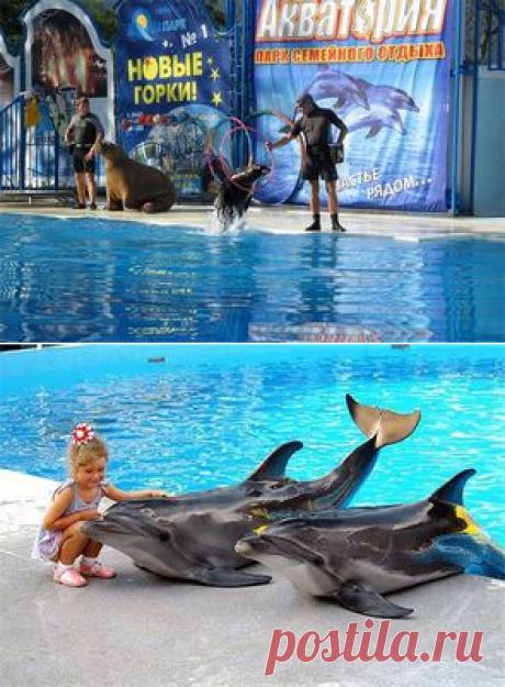 Ялта - акватория, дельфинарий, крокодиляриум   дельфинарий в Партените