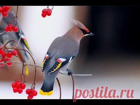 Лес. Релакс под пение птиц. Forest. Podryga-on-line.ru - YouTube