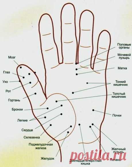 Волшебные точки на теле человека   источникОбо всём на свете           Волшебные точки на теле человека-Точка активации силы. Если собрать вместе кончики всех пальцев, она будет находиться в ямке в центре ладони. Если вы чувствуе…