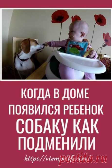 Когда в доме появился ребенок — собаку как подменили. А ведь его никто этому не учил! | В темпі життя