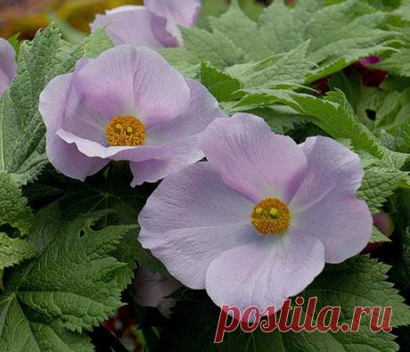 5 редких красивых растений, которые растут в тенистом саду   Блоги о даче, рецептах, рыбалке
