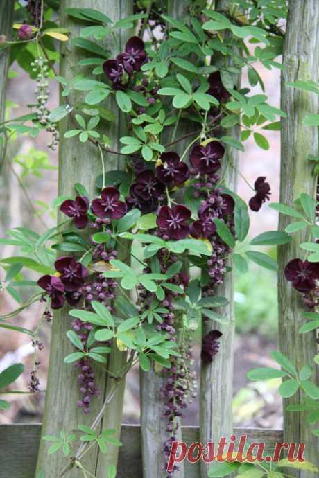 Продажа растений   Панглобальные растения