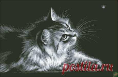 ВЫШИВКА-Кошечка на чёрном