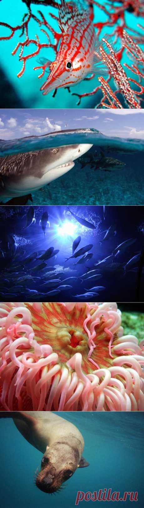 (+1) тема - Удивительный подводный мир | Наука и техника