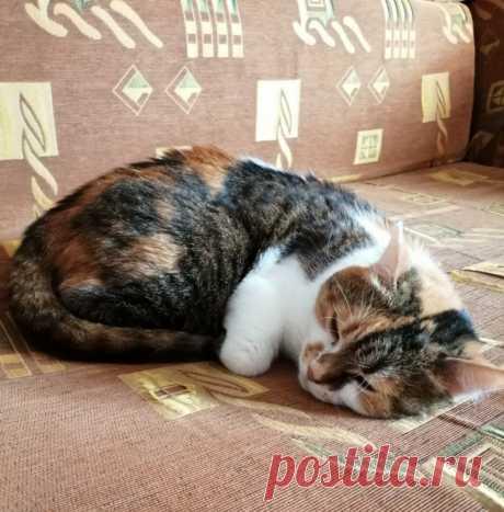Осенняя Милана или, когда у твоей кошки капризный характер | О кошках и не только | Яндекс Дзен