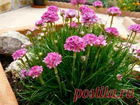 Высажу этим летом у себя в саду цветы, которые покорили меня своей красотой и своей неприхотливостью | САД | Яндекс Дзен