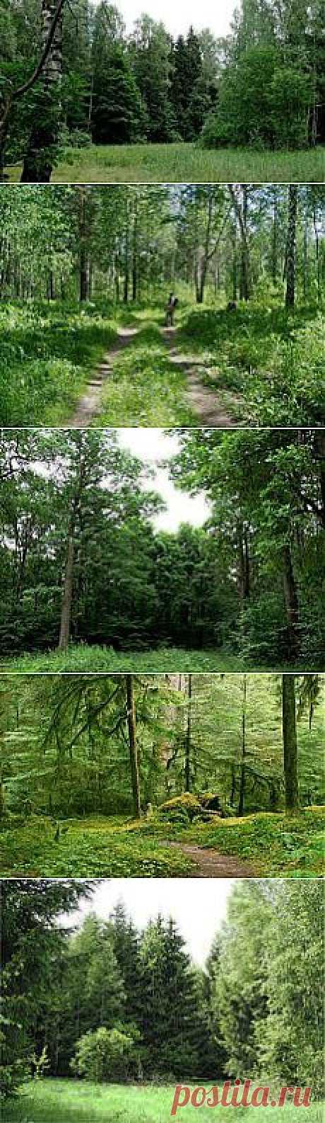 лес     :)