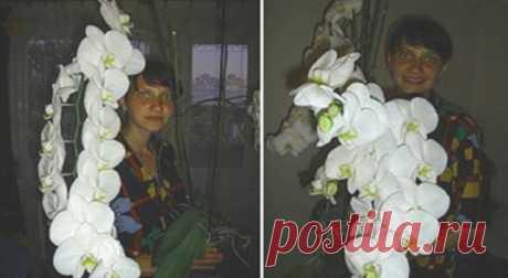 Пышное цветение гарантировано! Просто пересади орхидею в эту емкость… Бесценный совет! Совсем недавно я приобрела орхидею, которая никак не хотела приживаться в обычном пластиковом горшке. Впоследствии оказалось, что корни фаленопсиса были очень чувствительны к избытку …