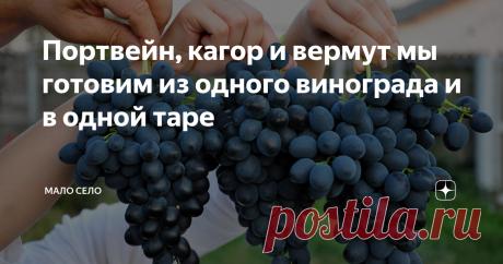"""Портвейн, кагор и вермут мы готовим из одного винограда и в одной таре Первый жом винограда это портвейн. Второй - кагор. И третий, соответственно, вермут. Готовим разные марки вина мы у себя дома из винограда """"Молдова"""". Этот виноград регулярно радует своим плодородием. Кисти плотно сбитые, ягоды на конце как бы вытянуты. Вино из них получается насыщенного темно-рубинового цвета. Конечно, в своем саду на юге мы не выращиваем лозы в промышленных масштабах. Но """"для дом"""