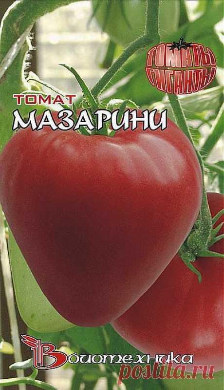 Мазарини томат – от грядки к столу- Читайте подробнее на FB.ru: https://fb.ru/article/16396/mazarini-tomat-ot-gryadki-k-stolu.