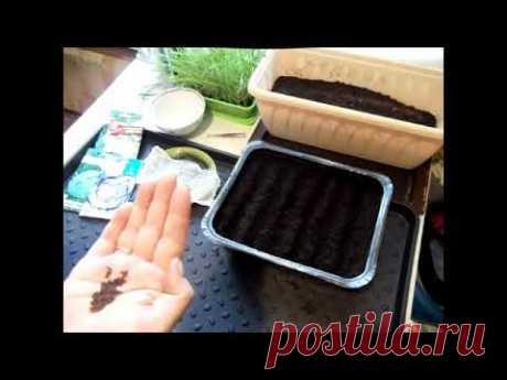 Посев семян  капусты на рассаду / Подготовка грунта / Стратификация