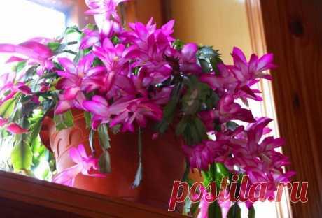 Находка для ленивых. 5 комнатных растений, которые цветут, но ухода не просят