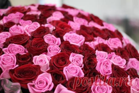 Язык цветов розы: что означают коралловые, красные и белые, 5, 11, 13, 15