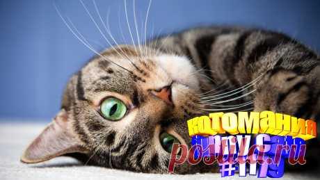 Любите смотреть приколы про котов? Тогда мы уверены, Вам понравится наше видео 😍. Также на котомании Вас ждут: видео кот,видео кота,видео коте,видео котов,видео кошек,видео кошка,видео кошки,видео о котах, видео приколы, видео смешное о кошках, для котов, кото приколы, кошек, милые, приколы о кошек, прикольные кошки, про смешных котов до слез, смешно про кошек, смешной кот, смешные приколы про животных, смешных животных, смотреть смешные животные, приколы с котами и кошками 2020