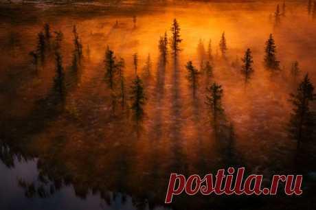 Дыхание рассвета в лесотундре Ямала. Утренний миг запечатлел Камиль Нуреев: nat-geo.ru/community/user/45446