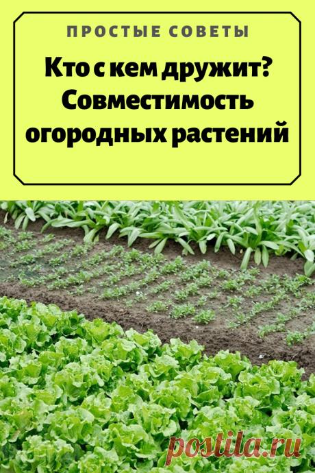 Кто с кем дружит? Совместимость огородных растений — Простые советы