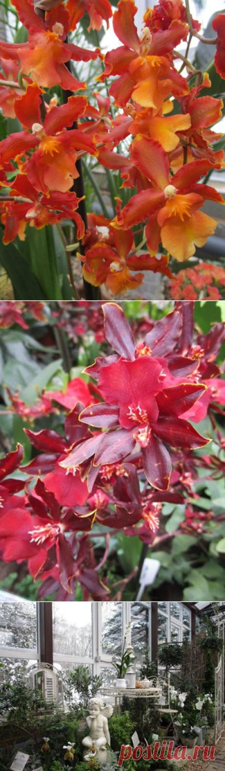Ботанический сад • Тверь - Публикации