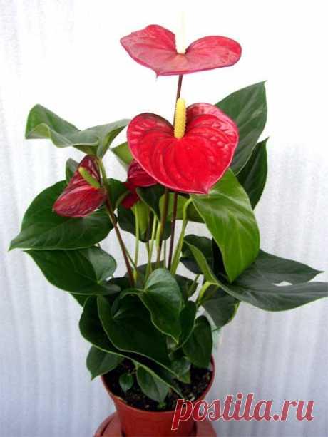 ПОЛЕЗНЫЕ СОВЕТЫ. 6 бабушкиных советов для комнатных растений