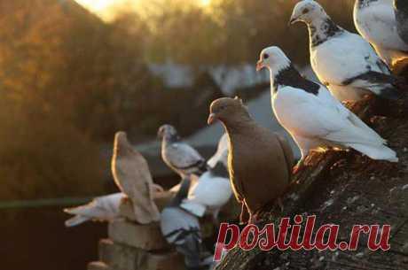 Крылатые почтальоны | Уши, лапы, хвост
