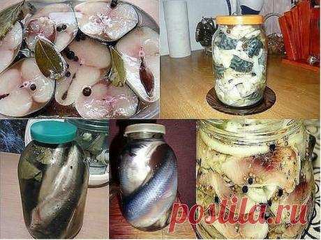 Готовим...12 Рецептов домашнего посола скумбрий, сельди, кильки и мойвы!!!
