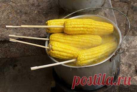 Оказывается, я всегда варила кукурузу не правильно! Это гениально! Оказывается, я всегда ее готовила неправильно  Початки, обязательно, разламываем пополам. Бросаем половинки початков в кастрюлю и заливаем водой. Как только вода закипит, добавьте в кастрюлю 1 чашку молока и 1 приличный кусочек масла. Кукуруза должна покипеть еще 8 минут. И все готово! Готовые поч
