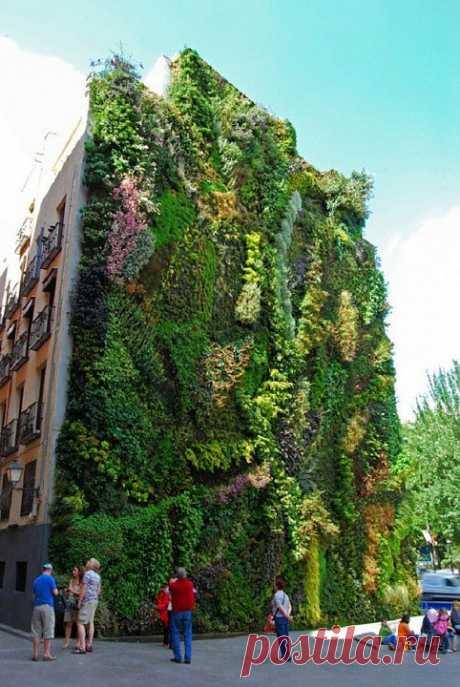 Великолепные  вертикальные  сады.