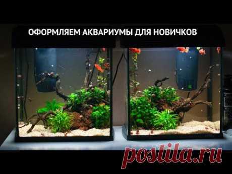 Запуск и обслуживание аквариумов для новичков с нуля