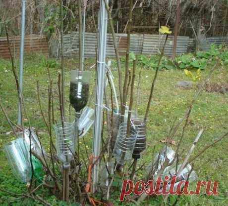 Un de los modos viejos de la reproducción de los árboles y los arbustos