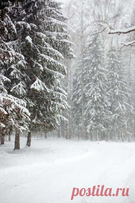 Единственное время года , которое надо любить и ценить . Белый снег покрывает и закрывает на время все чёрное и грязное, нам становится легче на душе.