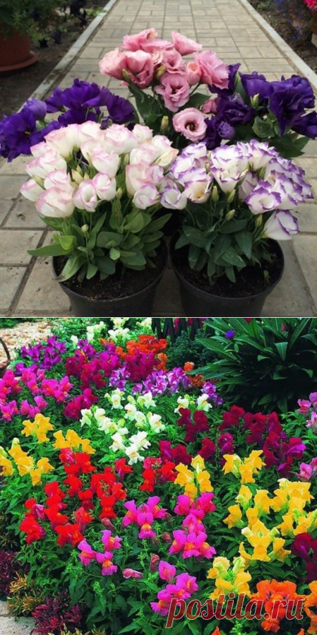 Сад и огород (@sadogorodacha) • Фото и видео в Instagram