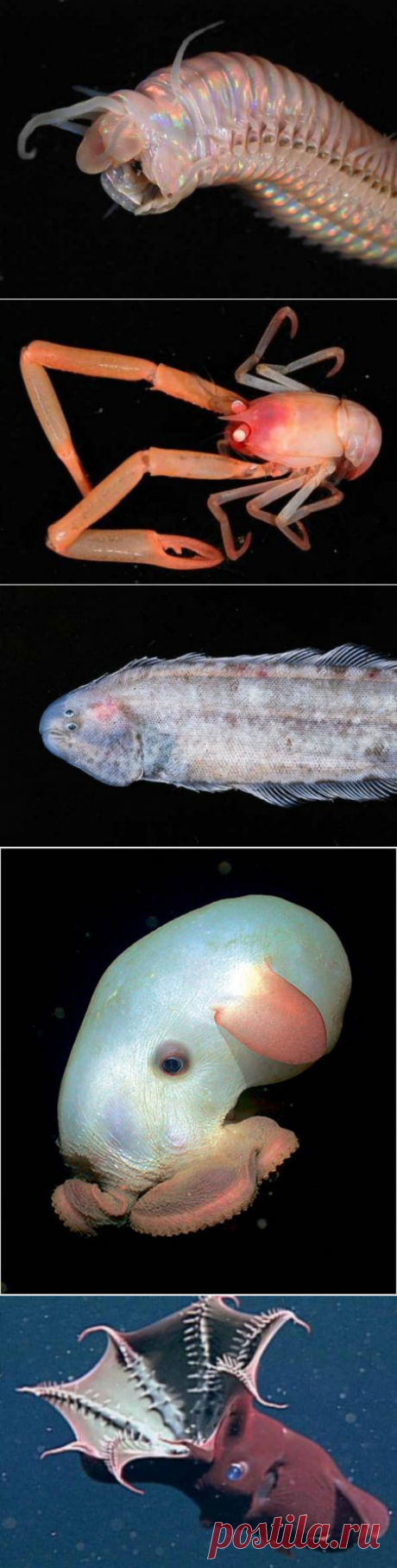 Глубинные существа, ошеломляющие своим видом — Наука и жизнь