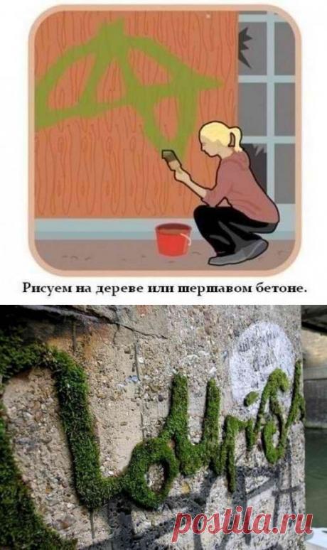 Как вырастить надпись или рисунок из мха
