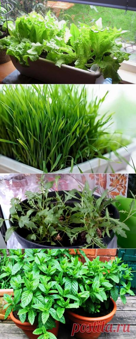 Съедобные растения на подоконнике - полезные советы