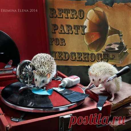 Художественные фотографии ёжиков от Елены Ерёминой — Фотошедевры