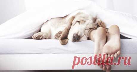 Секрет спокойного сна раскрыт! Нужно лишь повернуть кровать…