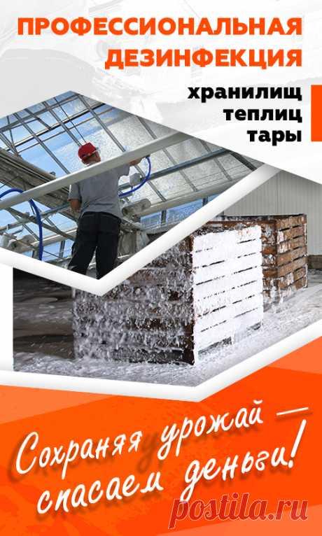 Полурядный комбайн для уборки смородины, аронии, крыжовника, шиповника, жимолости JOANNA-4 Standard купить в Беларуси, цены в каталоге Selagro