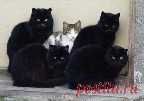 Los guardaespaldas)
