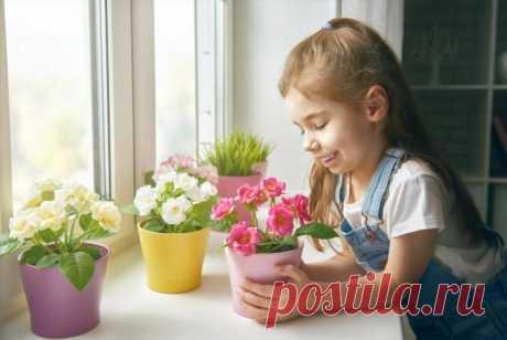 Комнатные растения опасные для детей