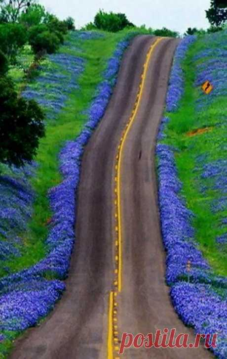Texas Bluebonnets Highway, USA