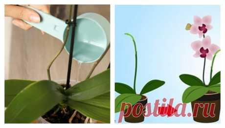 Как добиться буйного цветения орхидеи: 9 основных правил Людям нравятся орхидеи, и многие не откажутся иметь в доме это великолепное растение. Но украшением дома орхидея станет тогда, когда зацветет. А для этого ей нужно обеспечить определенные условия. Играет роль не только внешние факторы, но и правильный уход. Если не выполнить все условия — орхидея не
