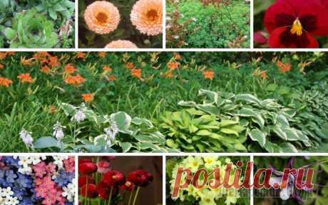 Неприхотливые цветы, которые можно выращивать где угодно Цветы, которые можно посадить в любом, даже самом непривлекательном, уголке сада, совершенно забыть об уходе за ними, а потом с удивлением обнаружить, что они в прямом смысле цветут и пахнут! Все раст...