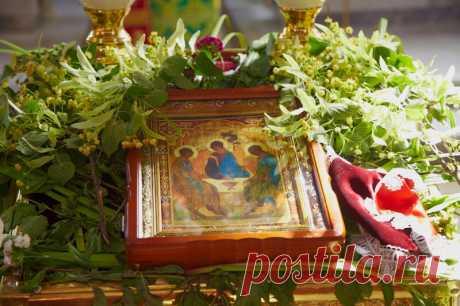 Какие травы нужно успеть собрать к православной Троице и зачем? | СПЕЦИЯ | Яндекс Дзен