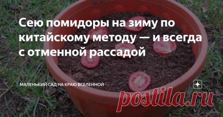 Сею помидоры на зиму по китайскому методу — и всегда с отменной рассадой Весной останется только внести в дом готовые горшки с посеянными на рассаду помидорами.