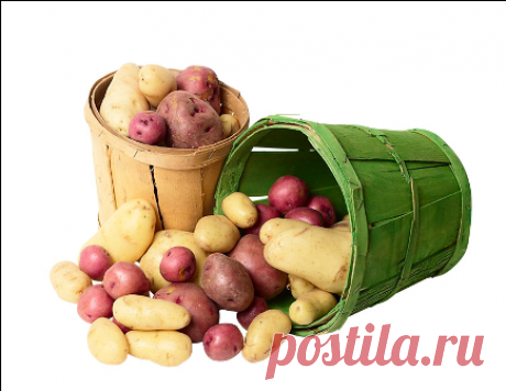 Как вырастить ведро картошки с квадратного метра