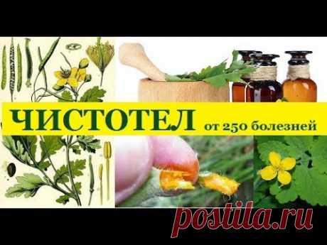 15.Чистотел - русский женьшень от 250 болезней.