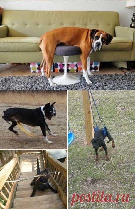 Эти забавные собаки — Сияние Жизни