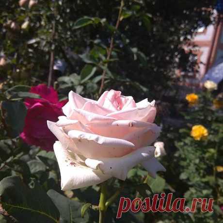На изображении может находиться: цветок, растение, дерево, на улице и природа