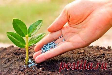 Как удобрять растения, чтобы получить хороший урожай?   ОГОРОД, где все растет   Яндекс Дзен