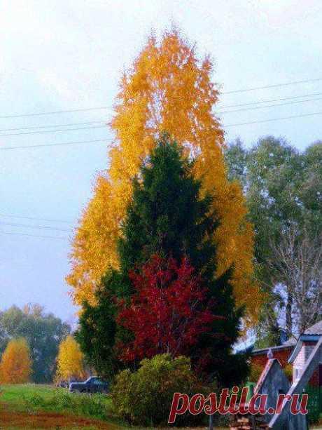 Осенняя гармония 🍁 🍂
